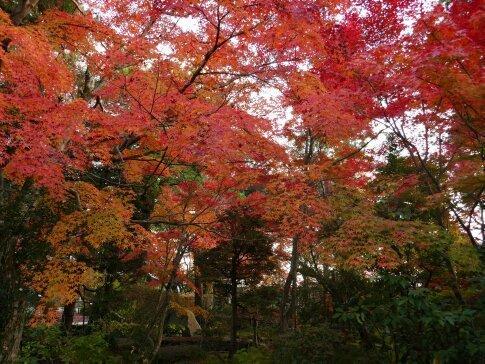 月山寺の紅葉4.jpg