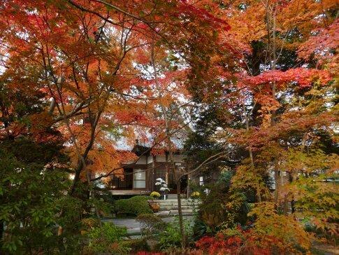 月山寺の紅葉6.jpg