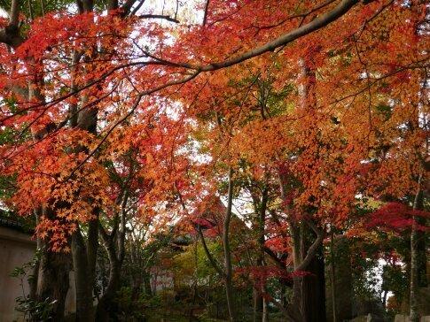 月山寺の紅葉7.jpg