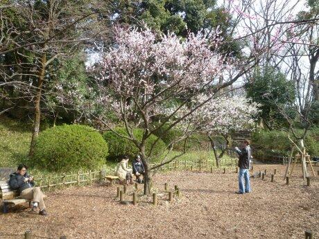 有栖川宮記念公園の梅.jpg