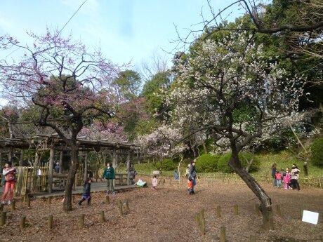 有栖川宮記念公園の梅4.jpg