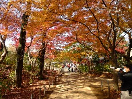 本土寺201303.jpg