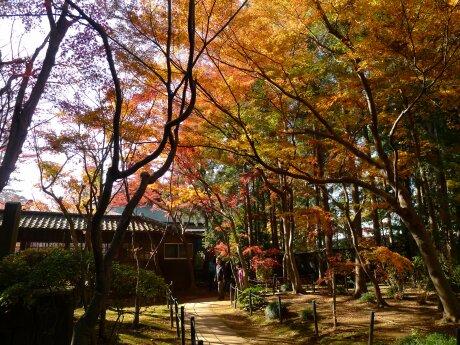 本土寺201305.jpg