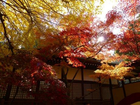 本土寺201306.jpg