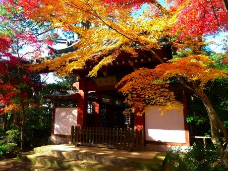 本土寺201307.jpg