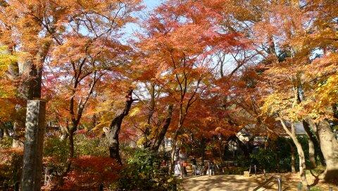 本土寺201301.jpg