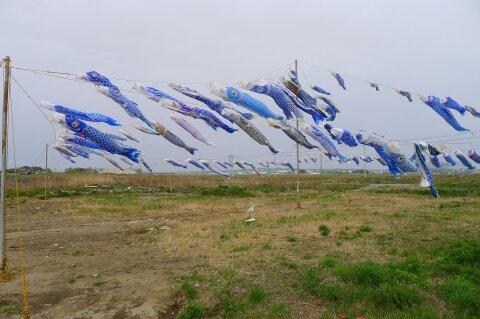 東松島 青いこいのぼり2.jpg
