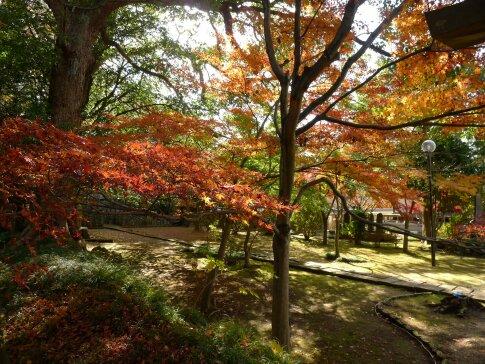 東漸寺の紅葉3.jpg