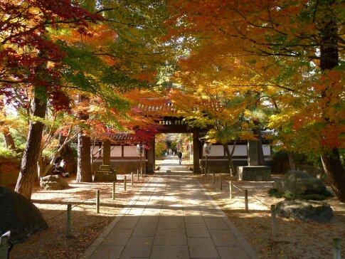 東漸寺の紅葉6.jpg