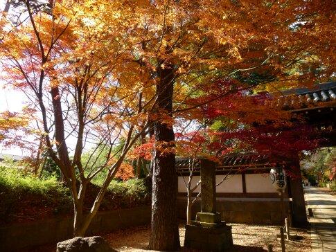 東漸寺の紅葉1.jpg