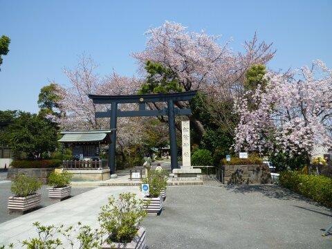 松陰神社の桜1.jpg