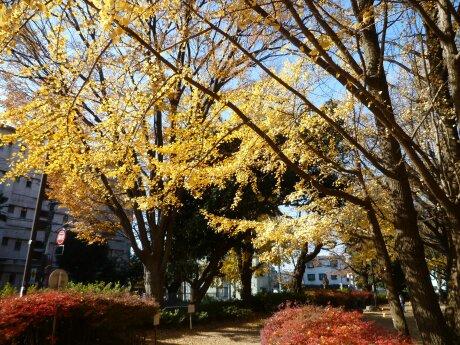 板橋区 平和公園 紅葉2.jpg