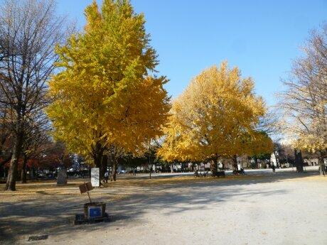 板橋区 平和公園 紅葉4.jpg
