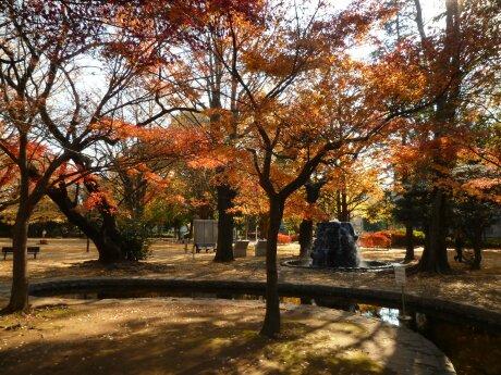 板橋区 平和公園 紅葉5.jpg