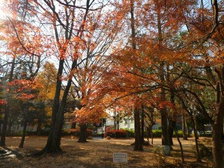 板橋区 平和公園 紅葉6.jpg