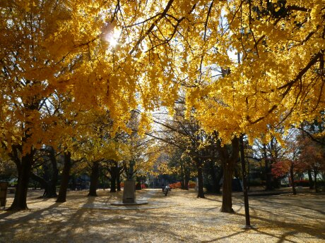 板橋区 平和公園 紅葉7.jpg