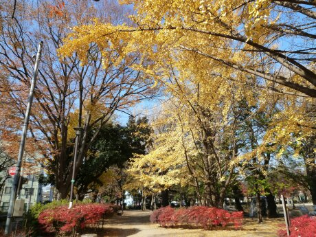 板橋区 平和公園 紅葉1.jpg