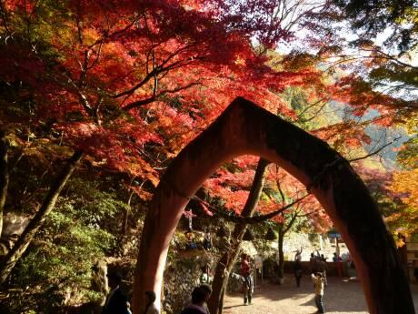 桃太郎神社 紅葉3.jpg