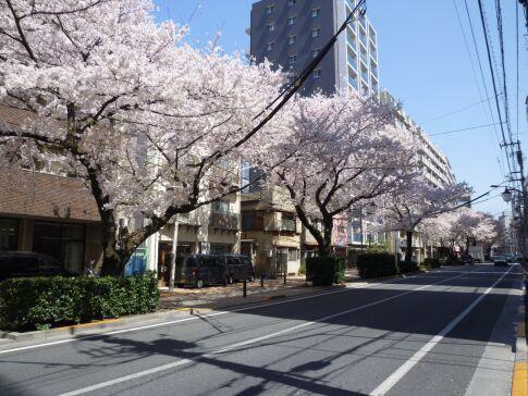 桜台の桜4.jpg