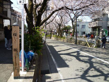 桜坂2012.jpg