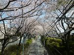 桜坂2012 大.jpg