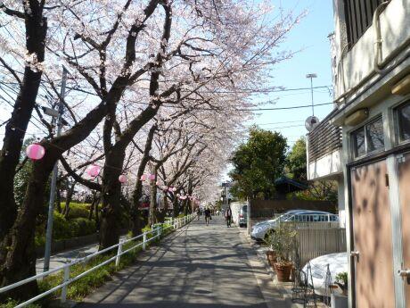 桜坂201202.jpg