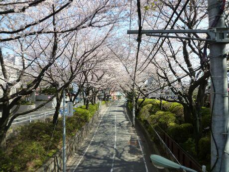 桜坂201203.jpg