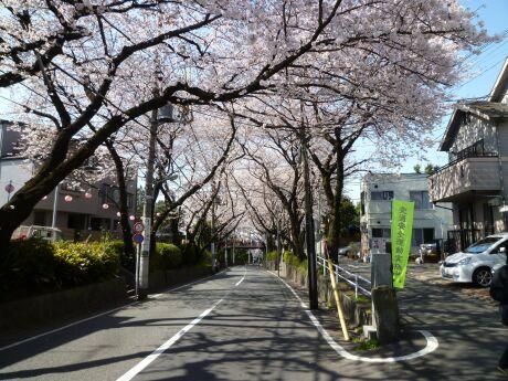 桜坂201201.jpg