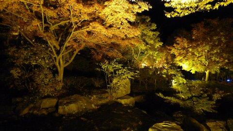 桜山公園の夜景2.jpg