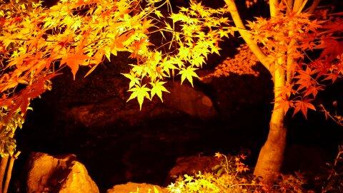 桜山公園の夜景5.jpg