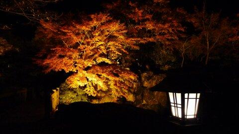 桜山公園の夜景8.jpg
