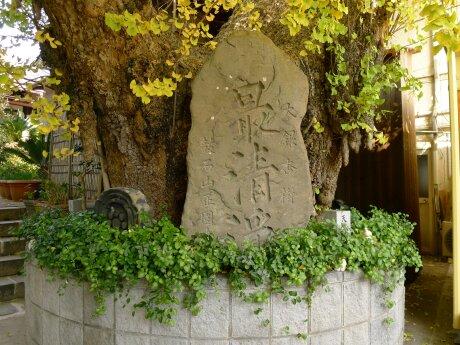 正円寺の大イチョウ.jpg