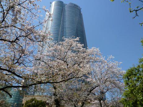 毛利庭園の桜4.jpg