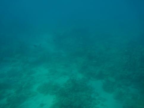 水中観光船seto5.jpg