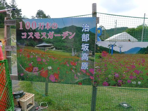 治部坂高原コスモス畑5.jpg