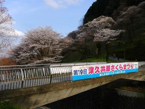 津久井湖の桜.jpg