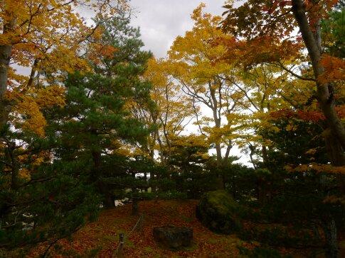 浄楽園  紅葉2.jpg