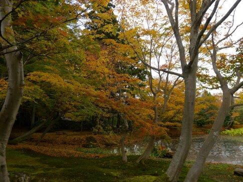 浄楽園  紅葉4.jpg