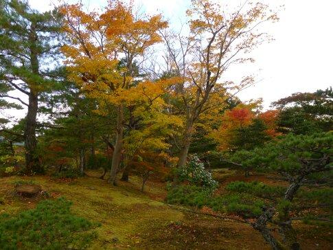 浄楽園  紅葉1.jpg