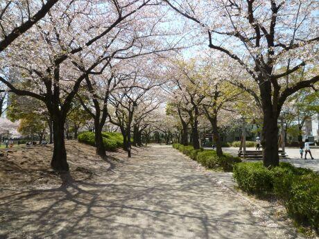 浮間公園 桜3 .jpg