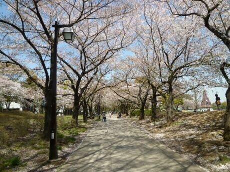 浮間公園 桜4 .jpg