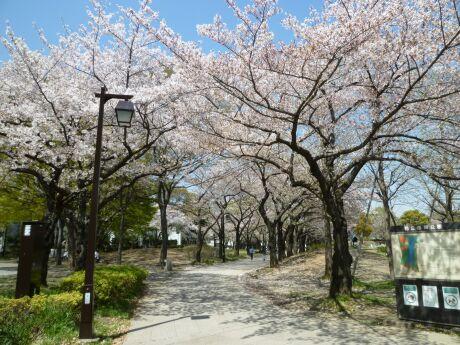 浮間公園 桜5 .jpg