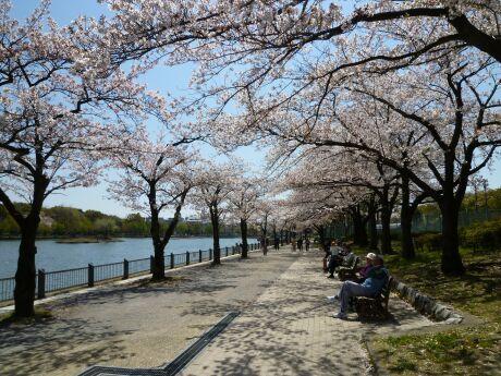 浮間公園 桜2 .jpg