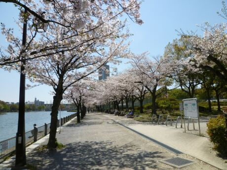 浮間公園 sakura .jpg