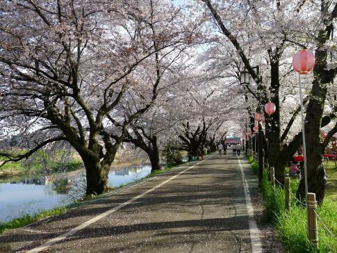 清洲城前の桜3.jpg