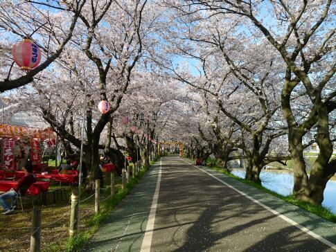 清洲城前の桜1.jpg