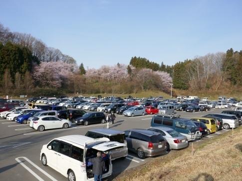 滝桜9a.jpg
