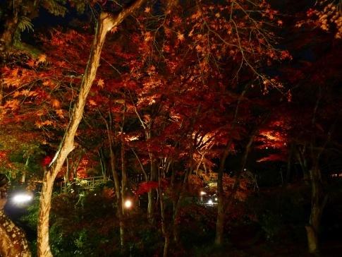 熱海梅園ライトアップ3.jpg