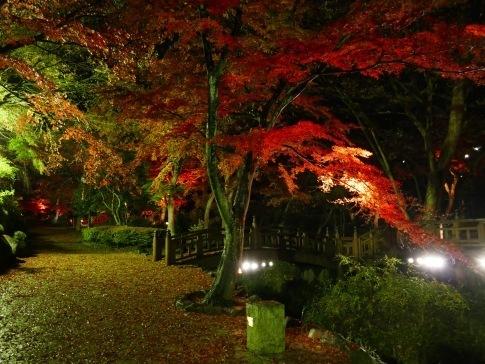 熱海梅園ライトアップ5.jpg