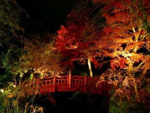 熱海梅園ライトアップ7.jpg